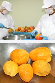 マンゴー果肉の2次加工